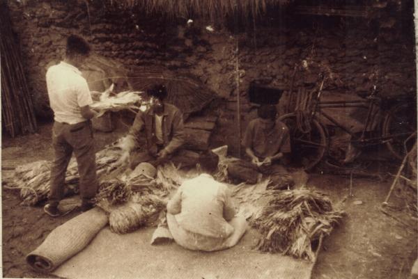 담배 조리하는 음지마 동네남자들. 그때만 해도 담배조리를 주로 마을 남자들이 했다.